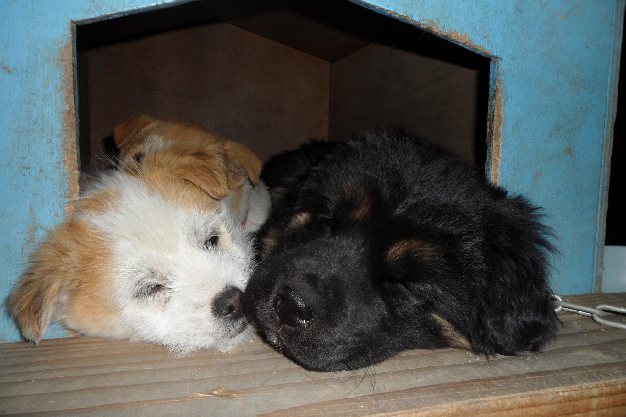 강아지들의 평화로운 취침모습들...