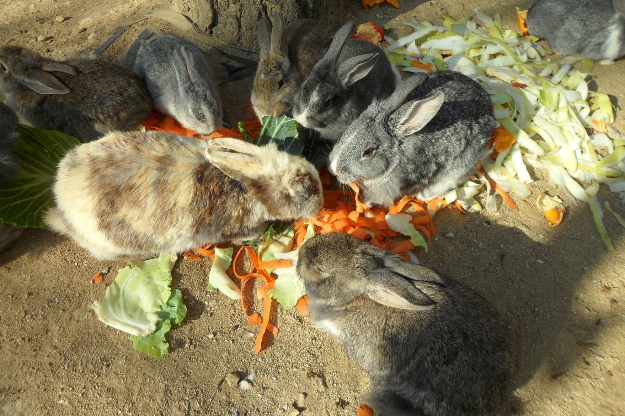 토끼들 세상-2대가 모여서 식사하는모습